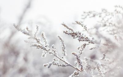 Magic Dezember bei brain & beauty solutions